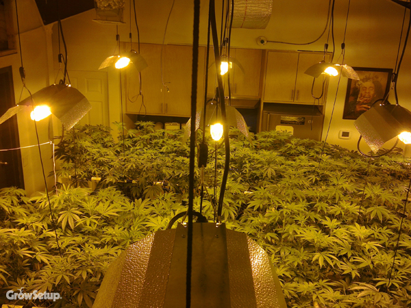 Grow room setups and designs Grow room designs